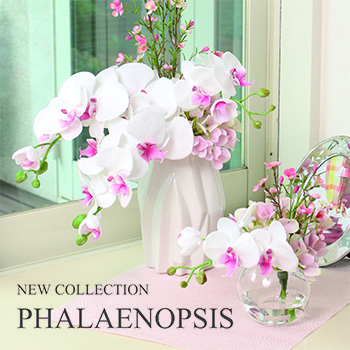 NEW COLLECTION - PHALAENOPSIS -