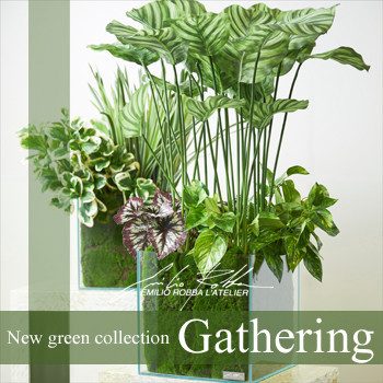 "NEW COLLECTION ""GATHERING""【EMILIO ROBBA】"